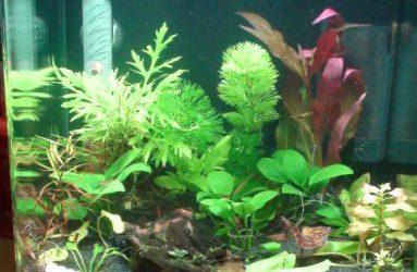 Как я увлеклась аквариумами