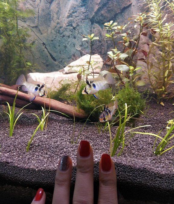 Как собрать и оформить 180-литровый аквариум с растениями. Часть 3